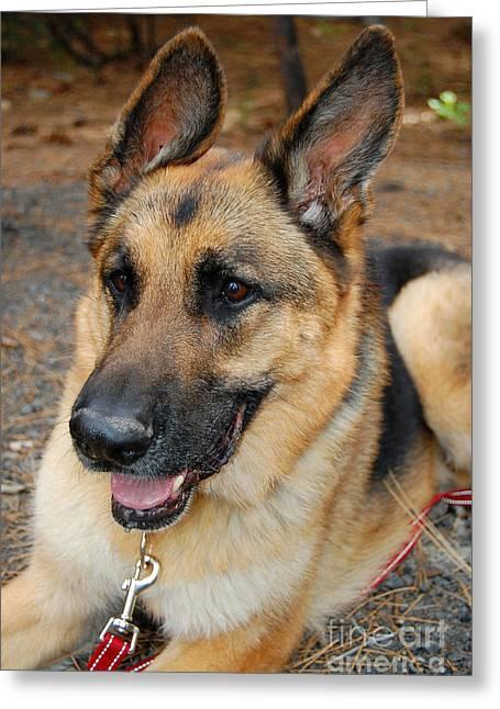 Doggies Greeting Cards - German Shepherd Greeting Card by Debra Thompson