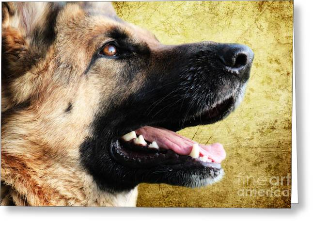 German Shepherd Portrait Greeting Card by Stephen Smith