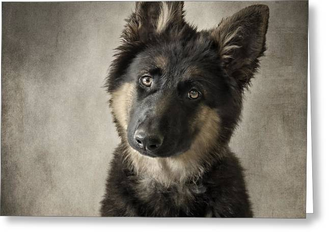 Head Tilt Greeting Cards - German Shepherd Puppy Greeting Card by Wolf Shadow  Photography