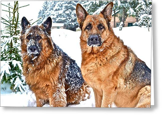 Dog In Snow Greeting Cards - German Shepherd Snow Dogs Greeting Card by Danielle Sigmon