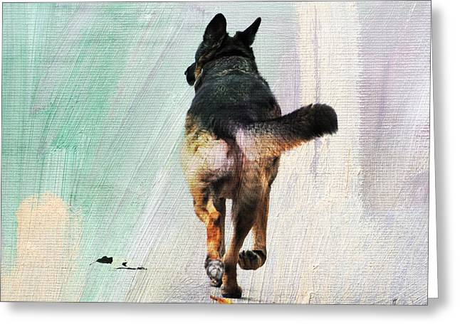 Dog Photographs Greeting Cards - German Shepherd Taking a Walk Greeting Card by Jai Johnson