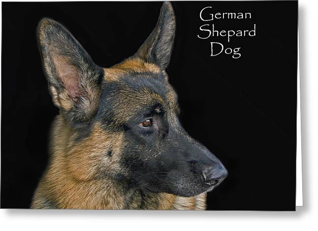 German Shepard Dogs Greeting Cards - German Shhepard Dog Greeting Card by Larry Linton