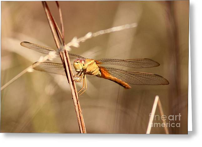 Yellow Dragonfly Greeting Cards - Get My Good Side Greeting Card by Carol Groenen