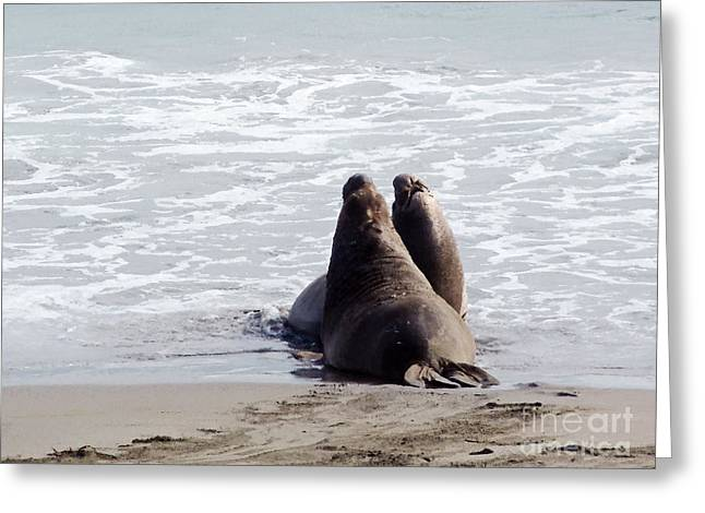 Bull Elephant Seals Fighting Greeting Cards - Get Off My Beach Greeting Card by Methune Hively