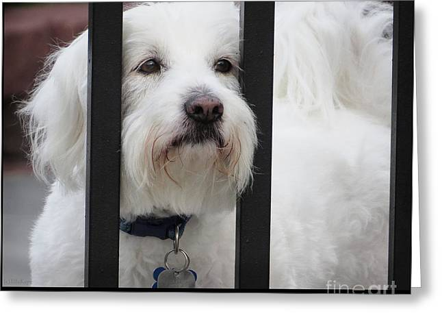 Puppies Mixed Media Greeting Cards - Get Out of Jail Free Card Greeting Card by Ella Kaye Dickey