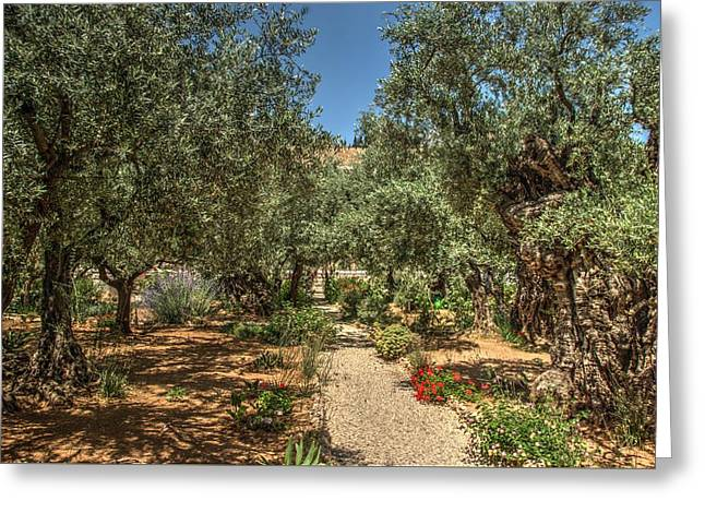 Gospel Greeting Cards - Gethsemane Gardens 2 Greeting Card by Dimitry Papkov