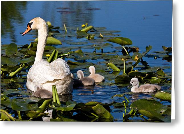 Metro Park Greeting Cards - Getting Close To Mom Greeting Card by James Marvin Phelps