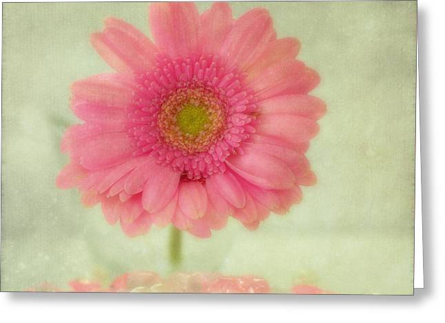 Fragrant Greeting Cards - Gh Greeting Card by SK Pfphotography