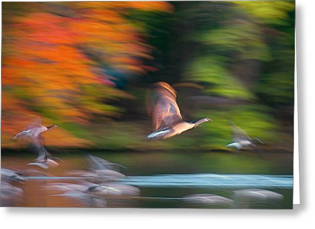 Oranger Greeting Cards - Ghost Geese Greeting Card by Steven Maxx