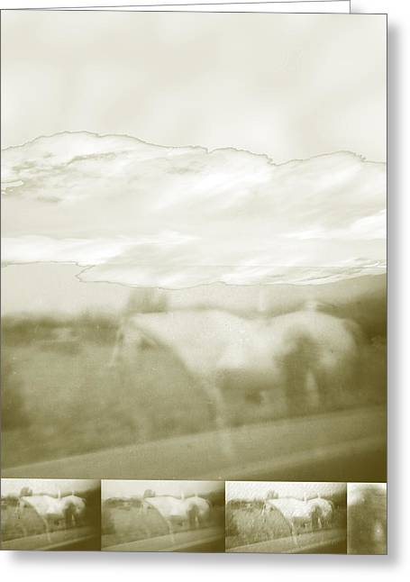 Ghost Horse Colorado Greeting Card by Ann Tracy