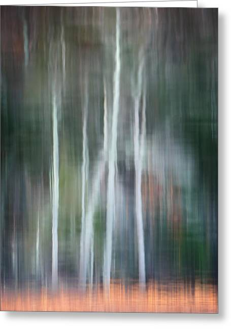 Ghost Of The Trees Greeting Card by Bill Wakeley