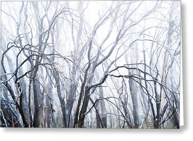 Ghostly Greeting Cards - Ghosts Greeting Card by Jody Partin