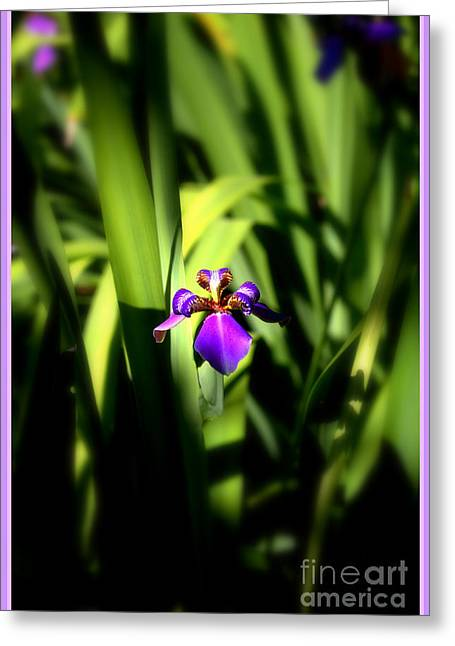 Iris Digital Art Greeting Cards - Giant Apostle Iris Greeting Card by Mindy Newman