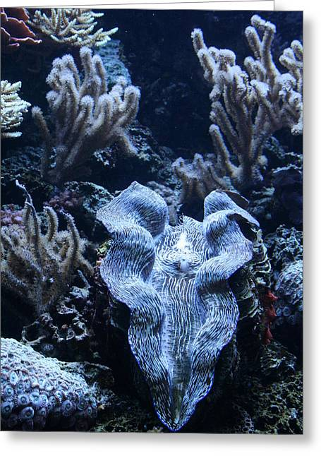 Giant Clam Greeting Card by Karl Reid