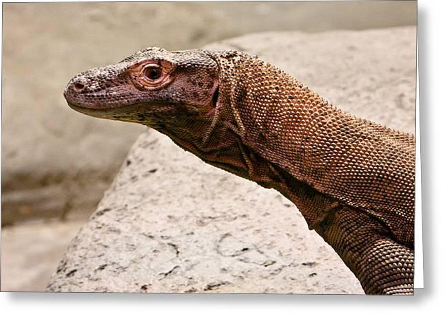 Goanna Greeting Cards - Giant Monitor Lizard 2 Greeting Card by Douglas Barnett