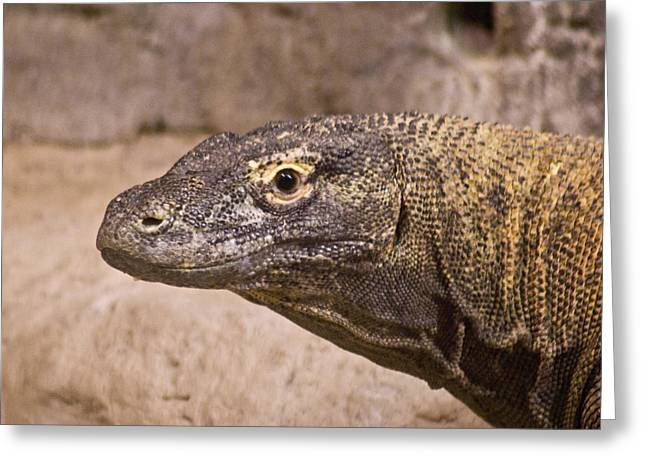 Goanna Greeting Cards - Giant Monitor Lizard Greeting Card by Douglas Barnett