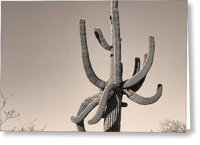 Giant Saguaro Cactus Sepia Image Greeting Card by James BO  Insogna