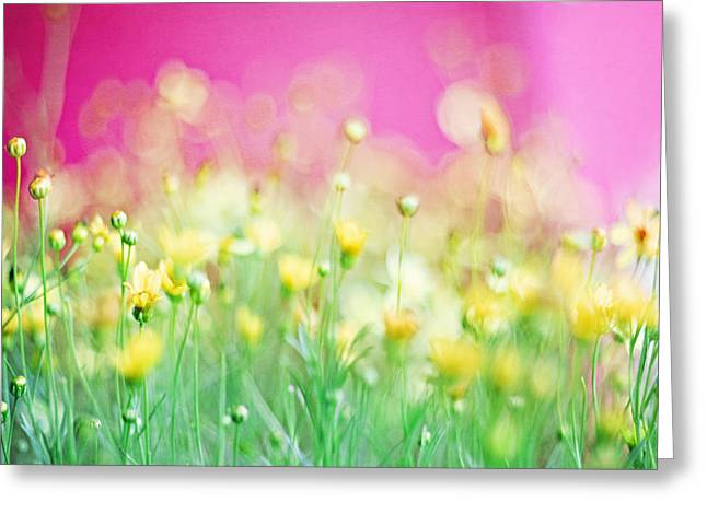Extra Large Prints Greeting Cards - Giddy in Pink Greeting Card by Amy Tyler