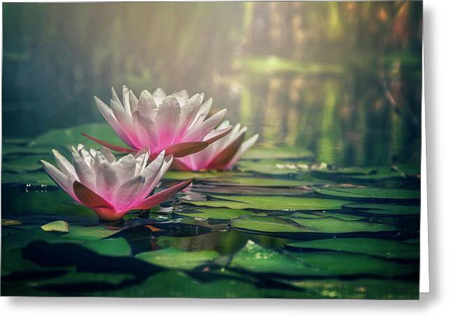 Lovely Pond Greeting Cards - Gilding The Lily Greeting Card by Carol Japp