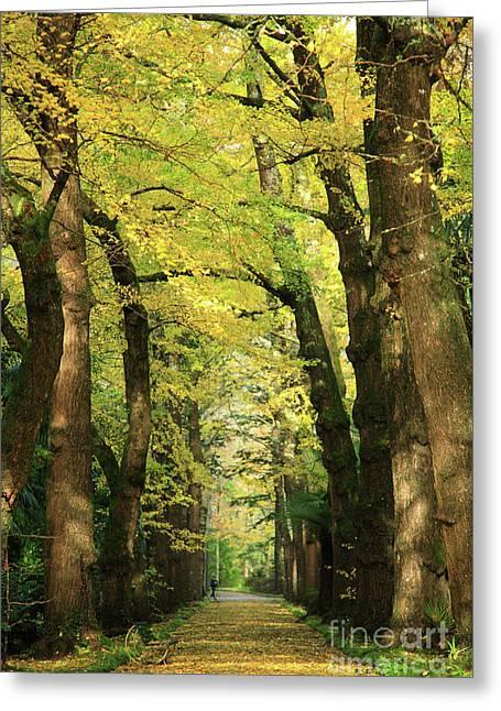 Azoren Greeting Cards - Ginkgo biloba trees Greeting Card by Gaspar Avila