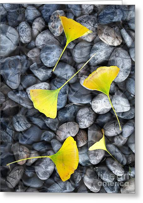 Grey Fine Art Greeting Cards - Ginkgo Leaves on Gray Stones Greeting Card by Laura Iverson