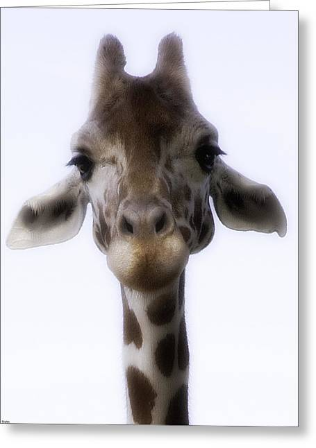 Barry Styles Greeting Cards - Giraffe 3 Greeting Card by Barry Styles