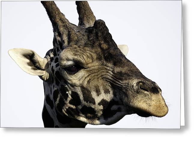 Barry Styles Greeting Cards - Giraffe 6 Greeting Card by Barry Styles