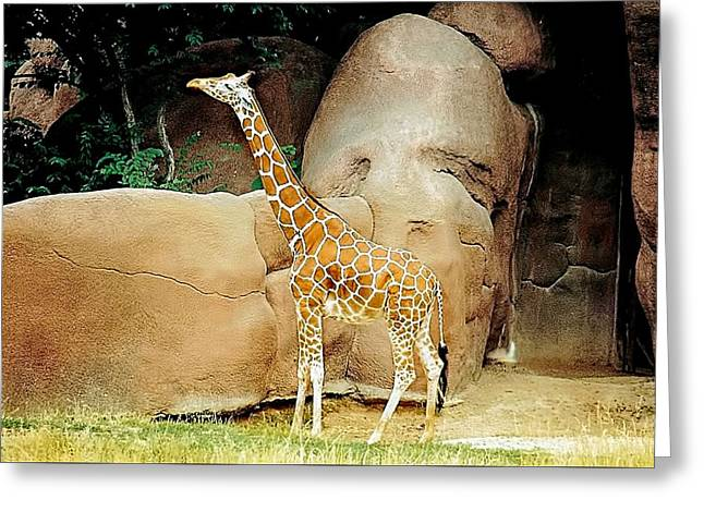 Graceful Tree Greeting Cards - Giraffe Beauty Greeting Card by Jan Amiss Photography