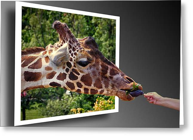 Photography Of Pictures In A Frame Greeting Cards - Giraffe Feeding Out of Frame Greeting Card by Bill Swartwout