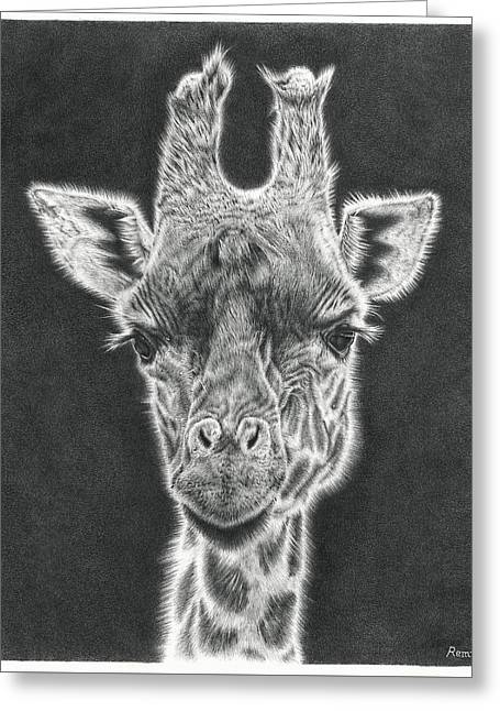 Recently Sold -  - White Drawings Greeting Cards - Giraffe Pencil Drawing Greeting Card by Heidi Vormer