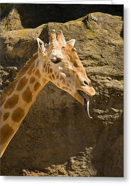 Giraffe Raspberry Greeting Card by Mike  Dawson