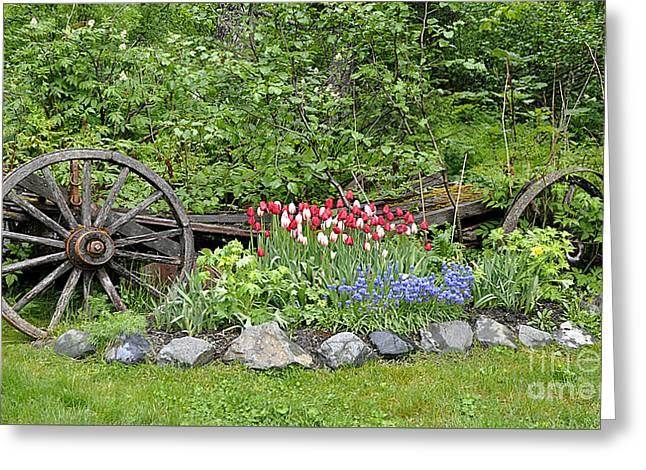 Rusted Barrels Greeting Cards - Girdwood Garden Alaska Greeting Card by Diane E Berry