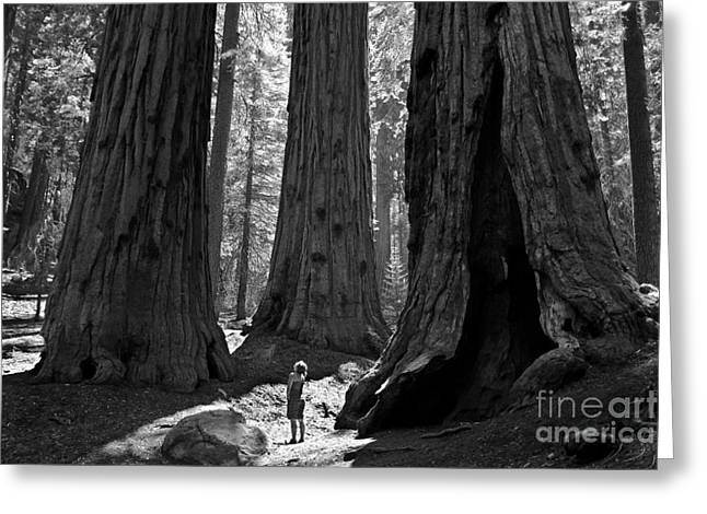 Sequoia Greeting Cards - Girl and Giants Greeting Card by Olivier Steiner