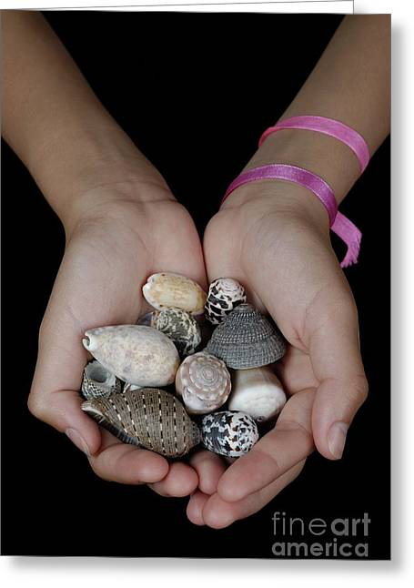 Person Of Color Greeting Cards - Girl holding shells in clasped hands Greeting Card by Sami Sarkis