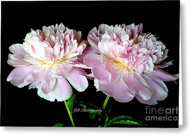 Spring Bulbs Greeting Cards - Girlfriends in Pink Greeting Card by Jeannie Rhode Photography