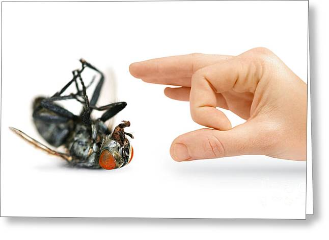 Bothers Greeting Cards - Give Pests The Flick Greeting Card by Ryan Jorgensen