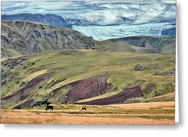 Glacier mountains meadows horses Greeting Card by David Halperin