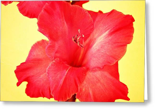 Gladiolas Greeting Cards - Gladiola Greeting Card by Cathie Tyler