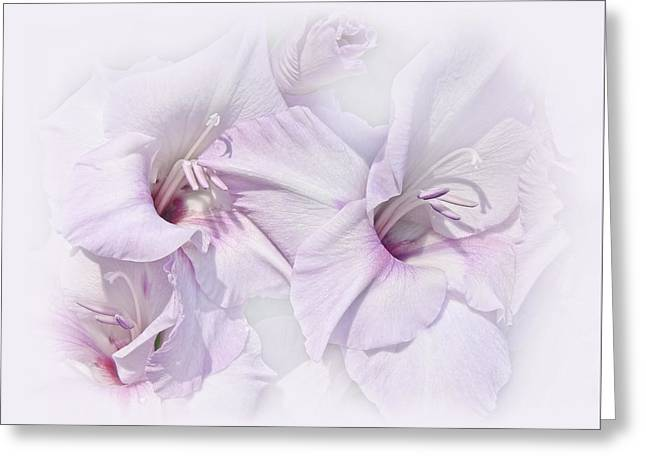 Gladiolas Greeting Cards - Gladiola Flowers Lavender Pastel Greeting Card by Jennie Marie Schell