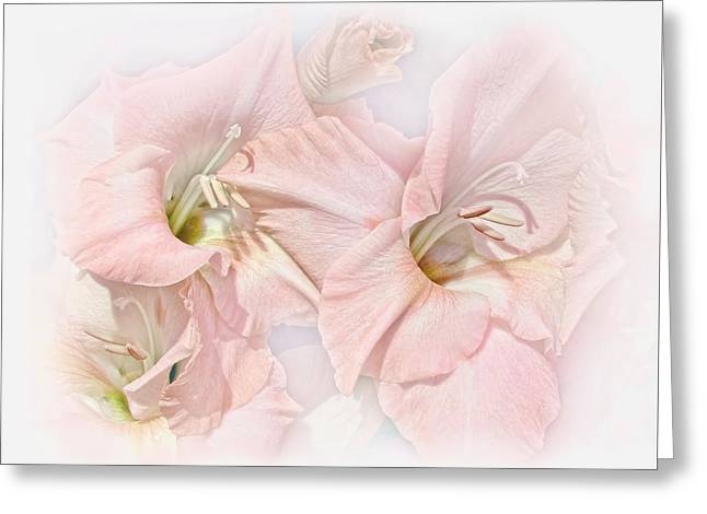 Gladiolas Greeting Cards - Gladiola Flowers Pink Pastel Greeting Card by Jennie Marie Schell