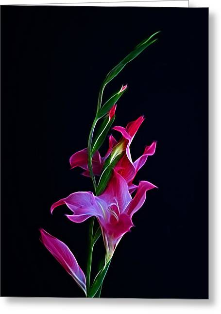 Indiana Art Greeting Cards - Gladiola Opening Greeting Card by Sandy Keeton