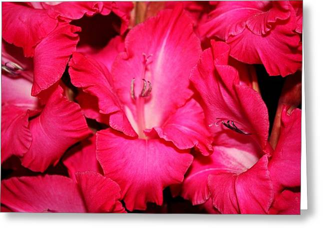 Gladiolas Greeting Cards - Gladiolas Greeting Card by Cathie Tyler