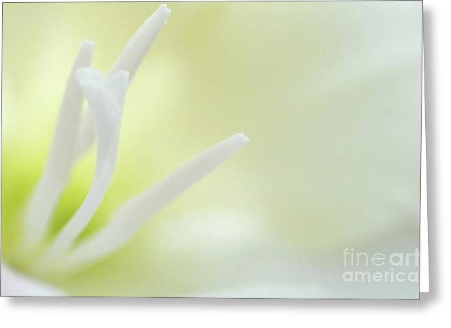 Gladiolus Greeting Cards - Gladioli stamen Greeting Card by Marion Galt