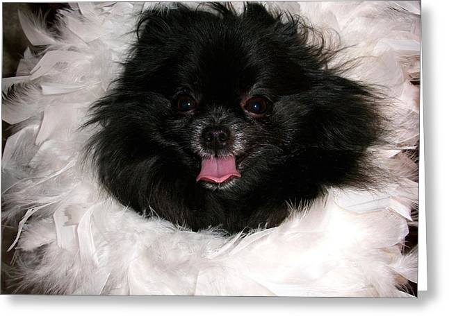 Animals Love Greeting Cards - Glamourous Pomeranian Greeting Card by Deborah Anderson