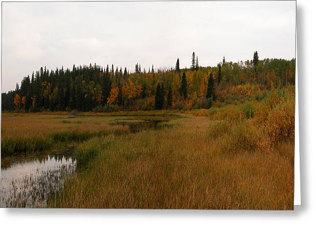 Glenmore Reservoir Greeting Cards - Glenmore reservoir - Autumn panorama Greeting Card by Stuart Turnbull