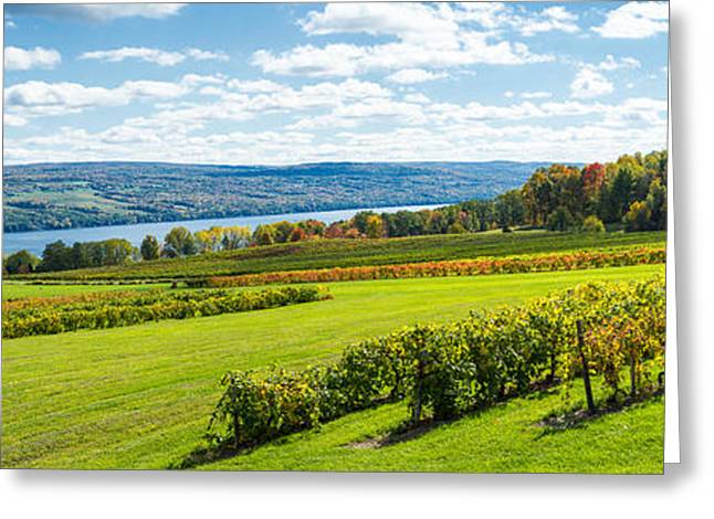 Seneca Greeting Cards - Glenora Vineyard, Seneca Lake, Finger Greeting Card by Panoramic Images