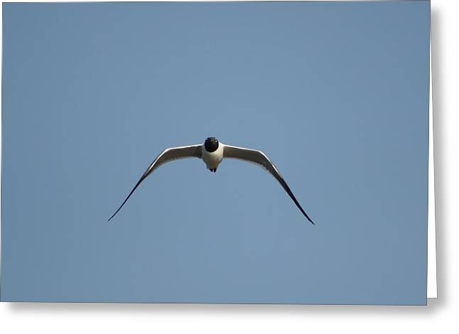 Tern Digital Art Greeting Cards - Glidding Tern Greeting Card by Jamie Smith