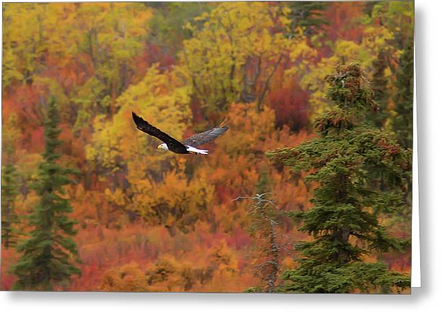 Glide Path Greeting Card by Ed Boudreau