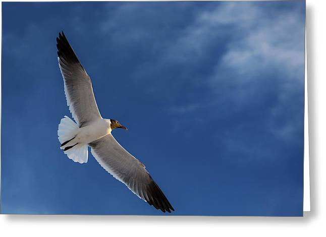Glider Greeting Card by Don Spenner