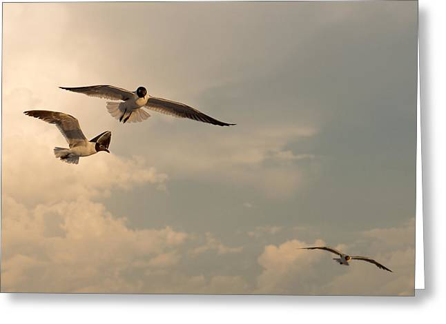 Gull Seagull Greeting Cards - Gliders Greeting Card by Don Spenner